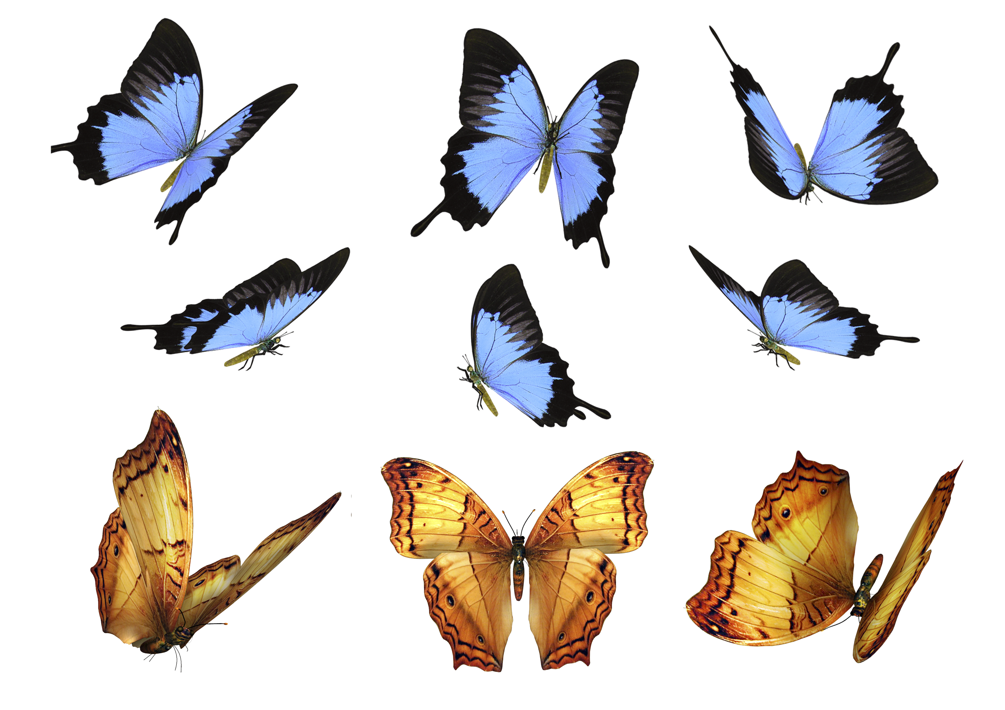 Butterfly overlay png. Free photo overlays photography