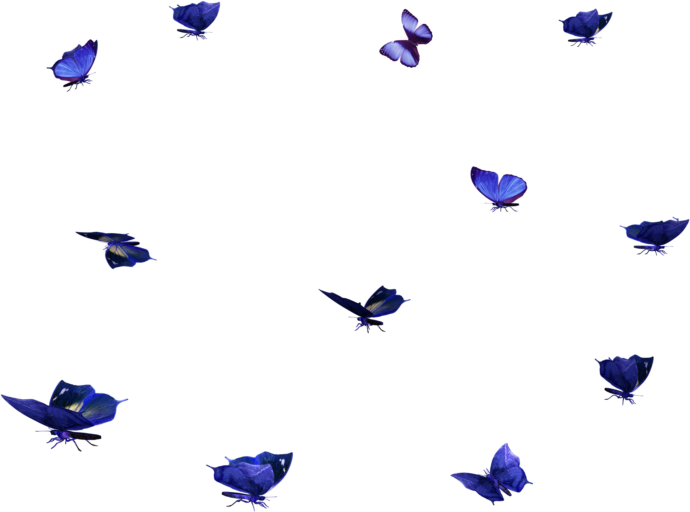 butterfly overlay png