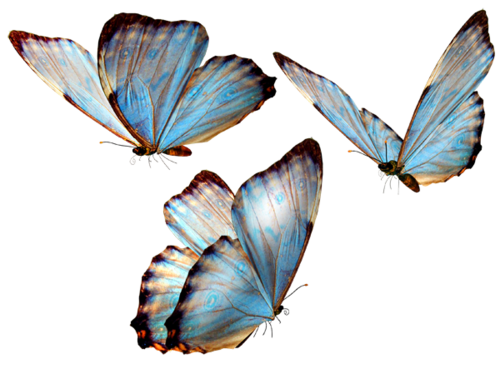 Butterfly overlay png. Transparency tumblr blue and