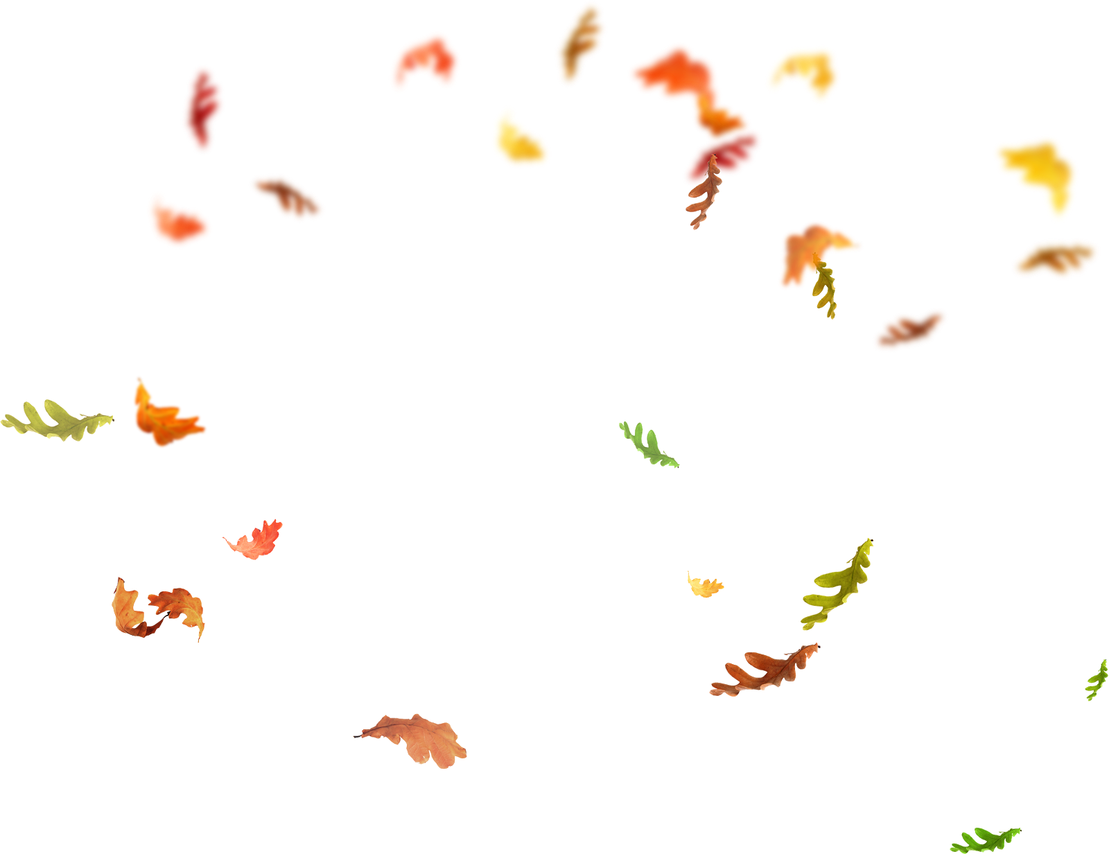 Butterfly overlay png. Leaf falling transprent free