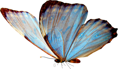 Butterfly overlay png. Images about on