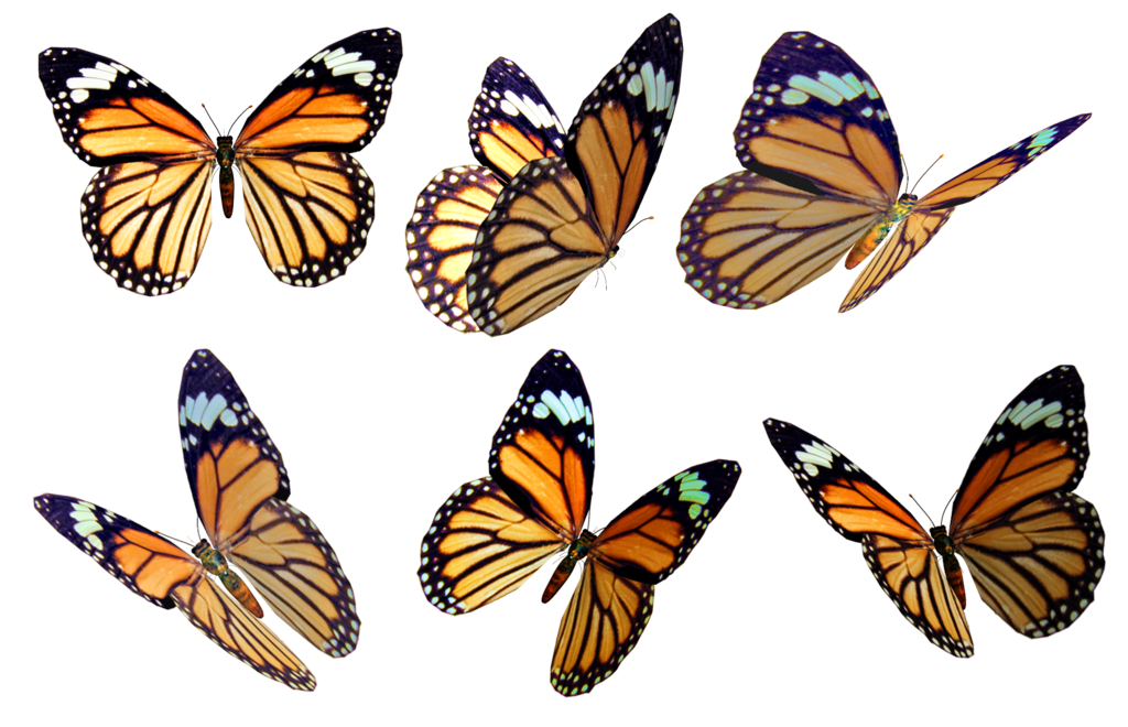 Butterfly overlay png. Butterflies stock by roys