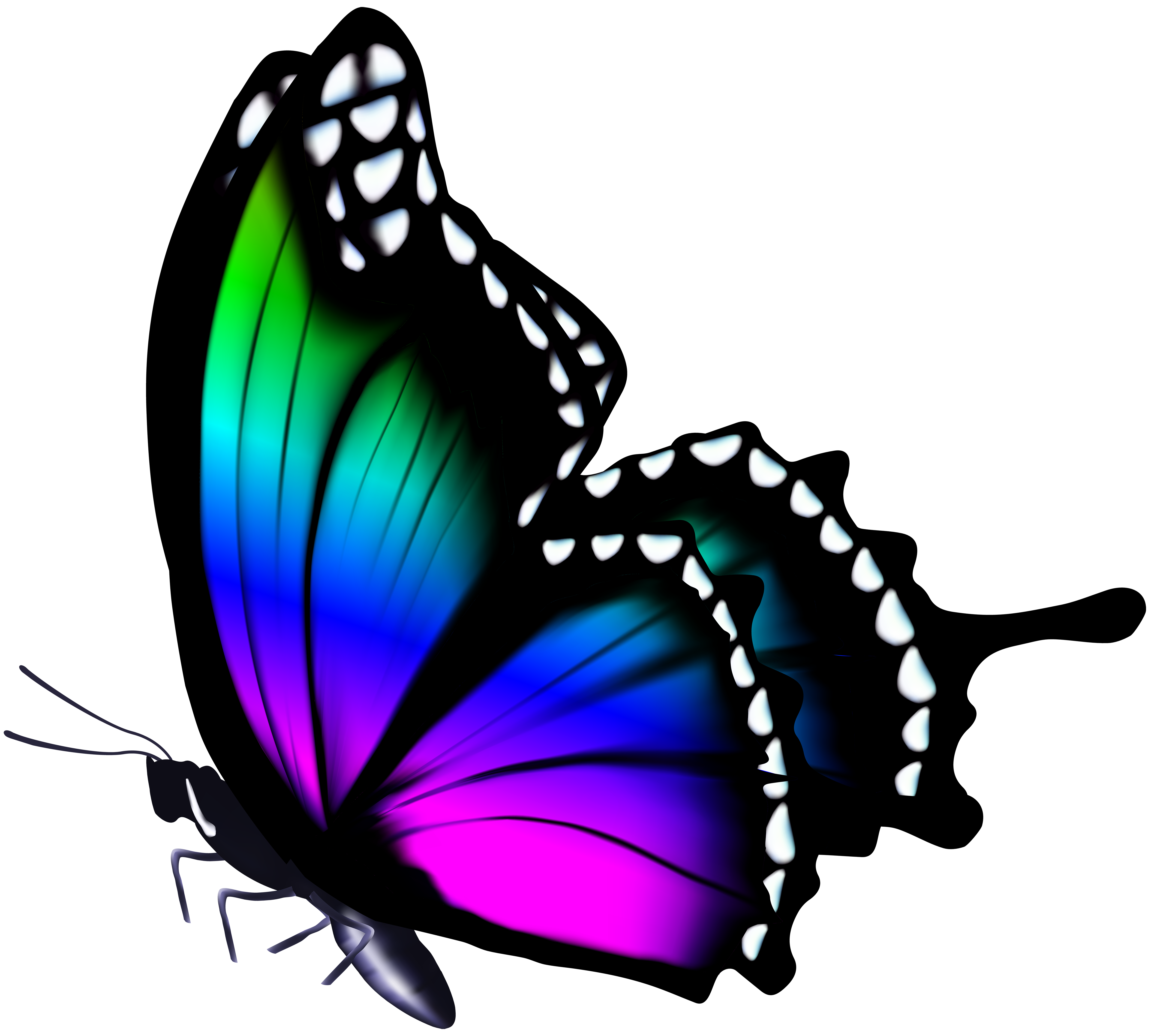 Butterfly .png. Png by heemipetal on
