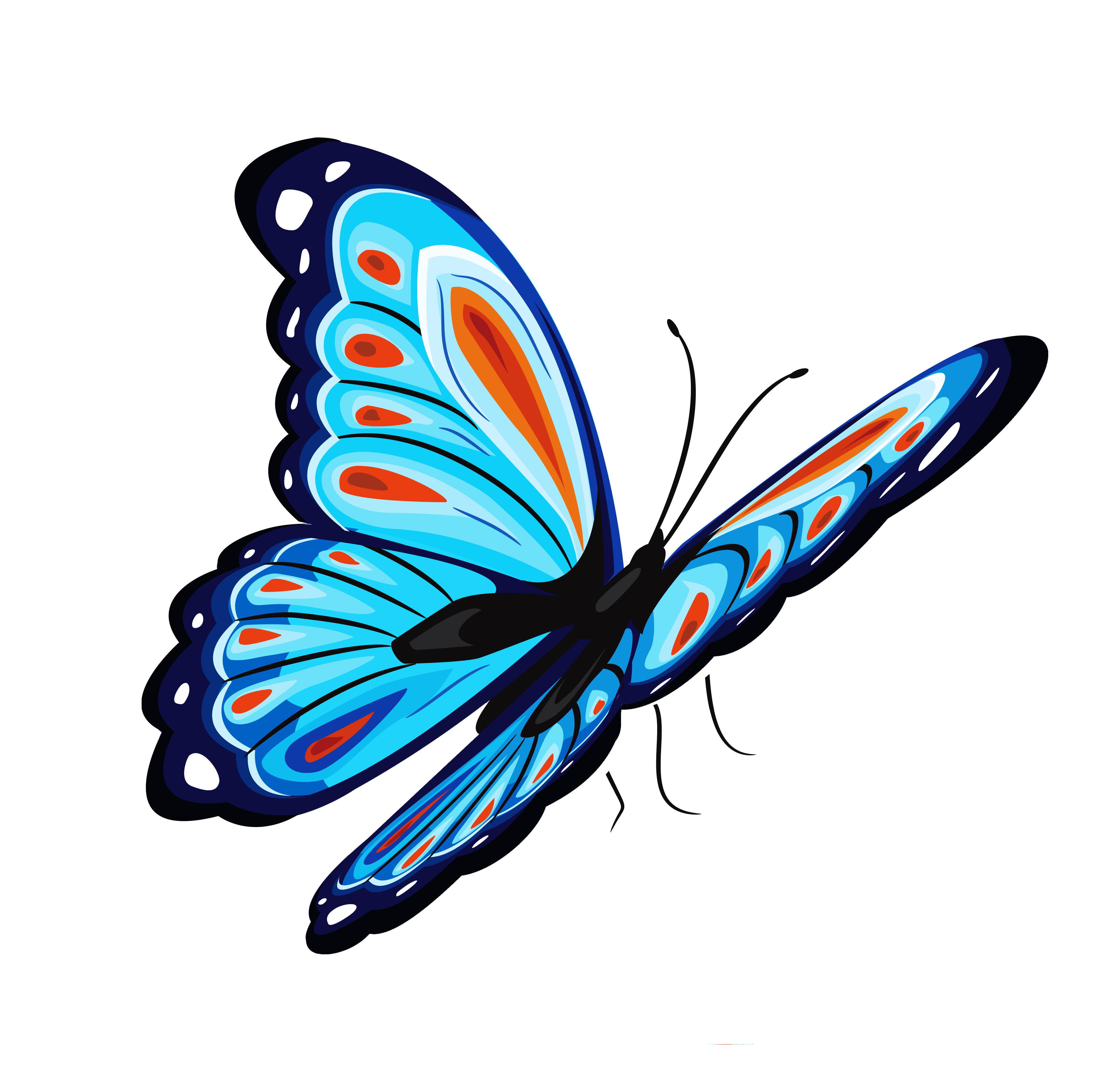 Butterfly png. Raheeq flowers butterflypng