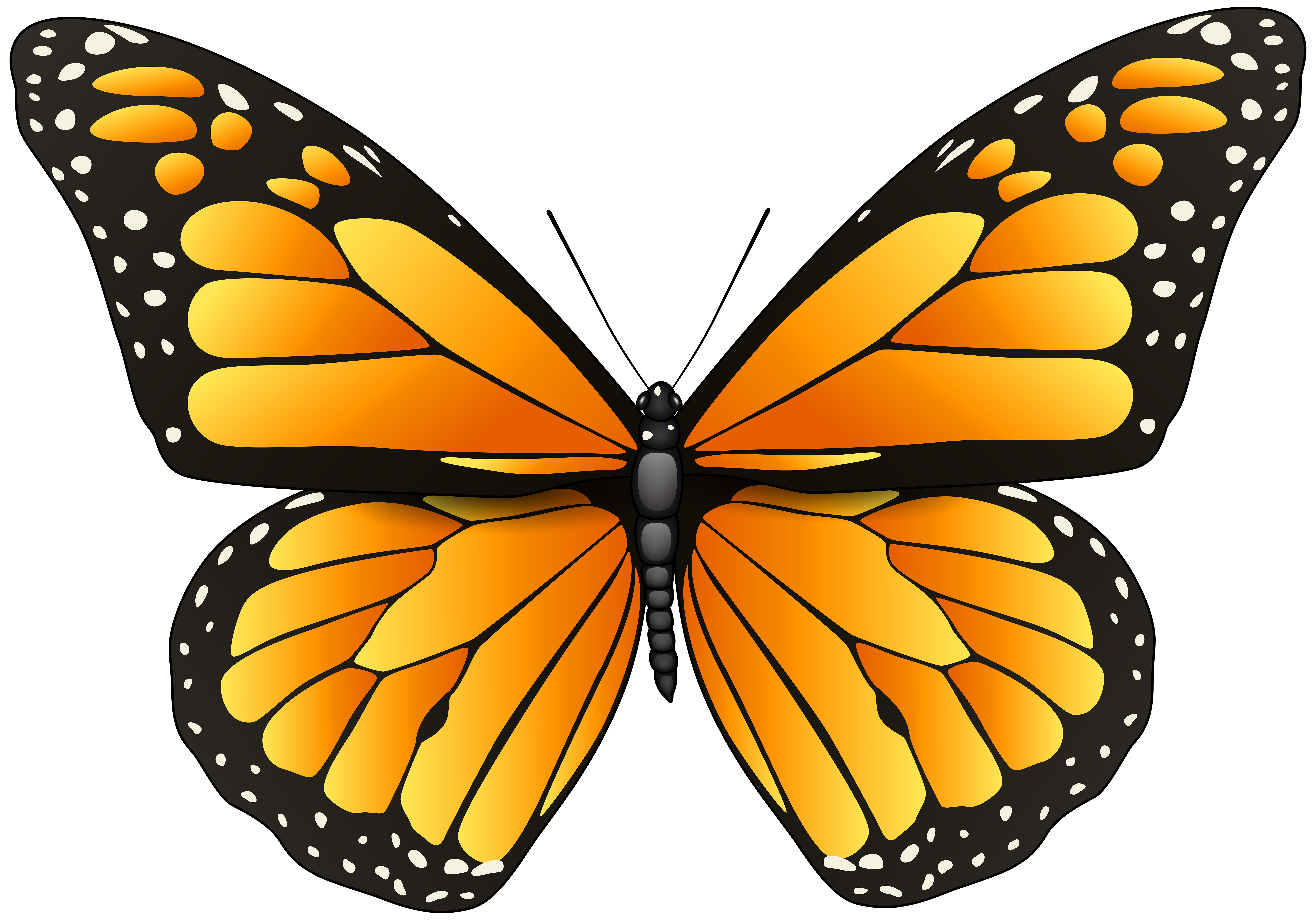 Butterfly png clipart. Orange clip art best