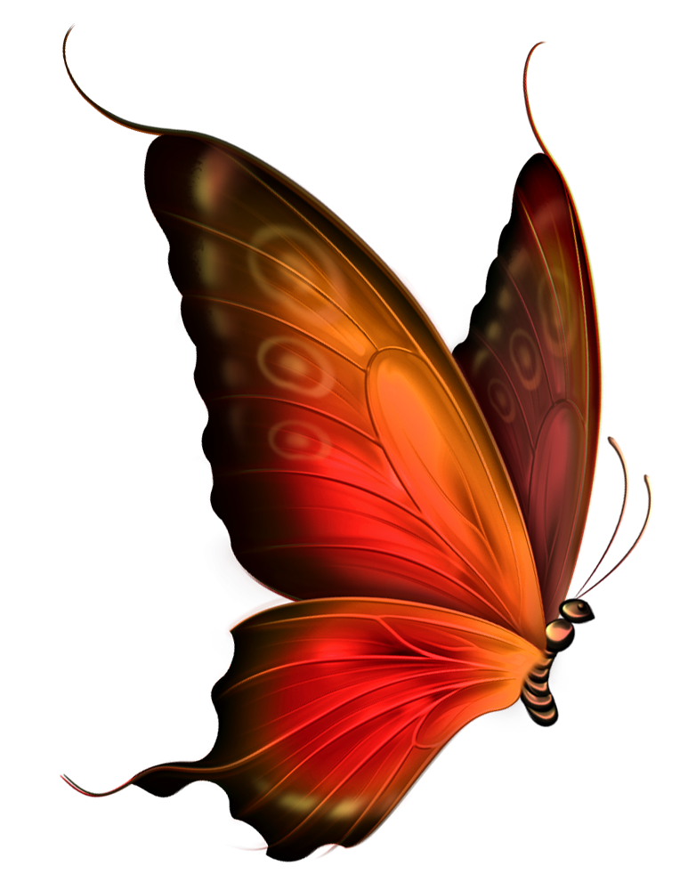 Butterflies png transparent. Red and brown butterfly