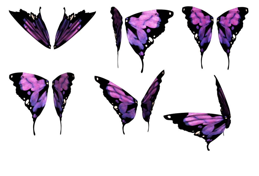 Butterfly wings png