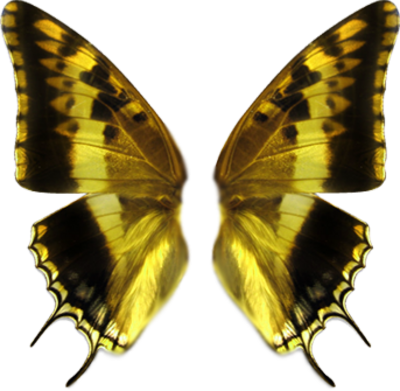 Butterfly wing png. Http www officialpsds com