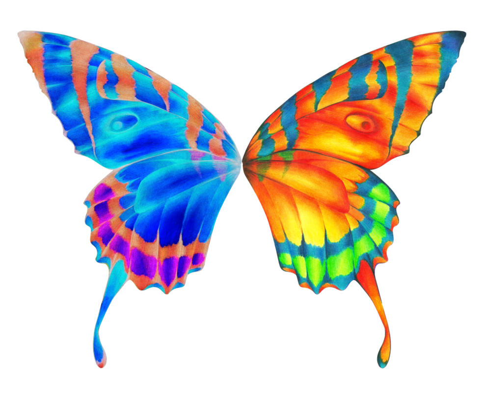 Butterfly wings png. More from moonaftermidnight graphic