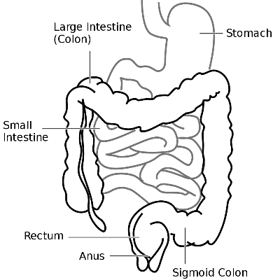 Butthole drawing skin diagram. Perianal dermatitis symptoms and