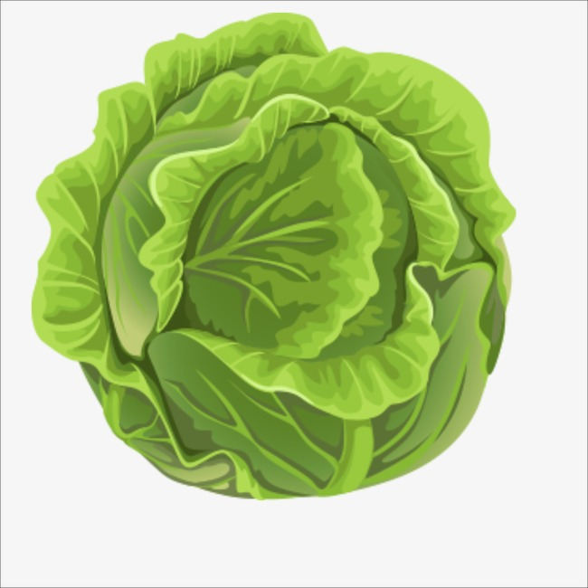 Cabbage clipart cabbage plant. Bun vegetables png image