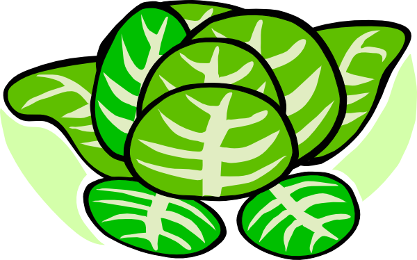 Cabbage clipart cabbage plant.