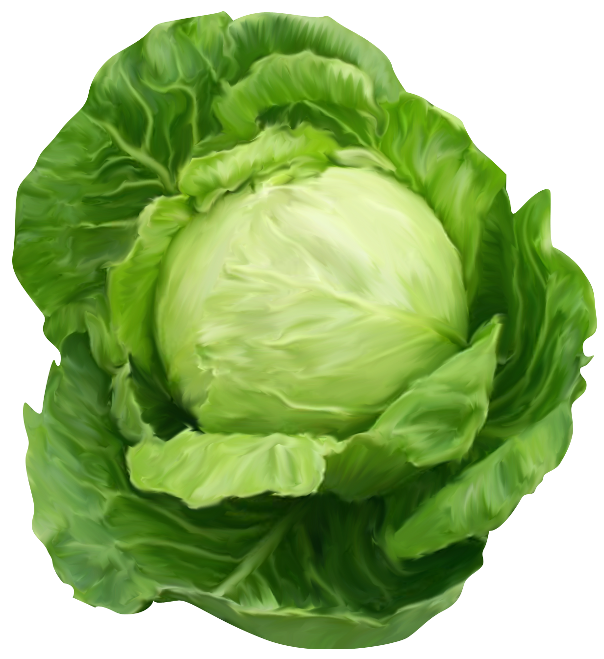Cabbage clipart illustration. In pinterest vegetables and