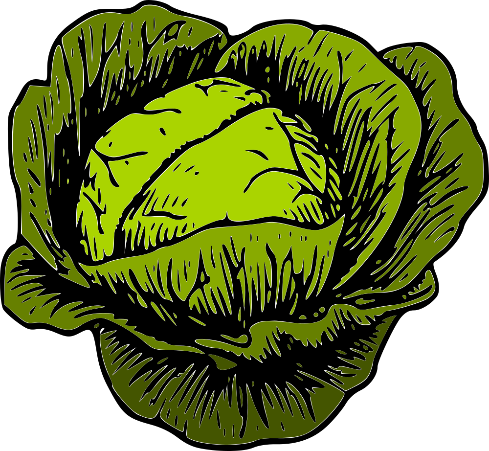 Cabbage clipart illustration. Onlinelabels clip art green