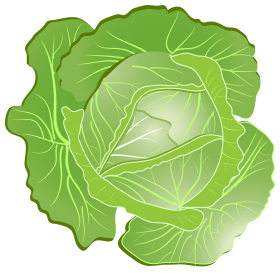 Cabbage clipart illustration. Plant clip art free