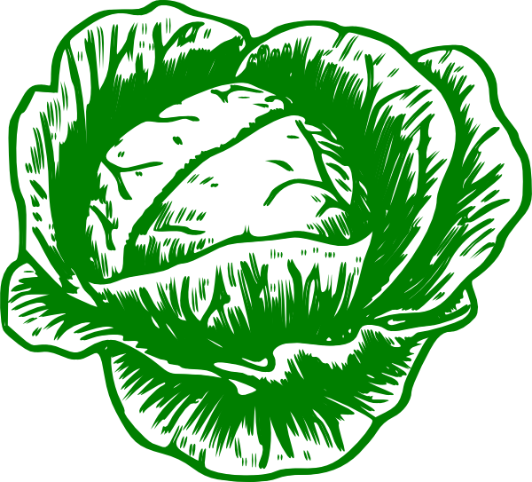 Cabbage clipart illustration. Mon petit clip art