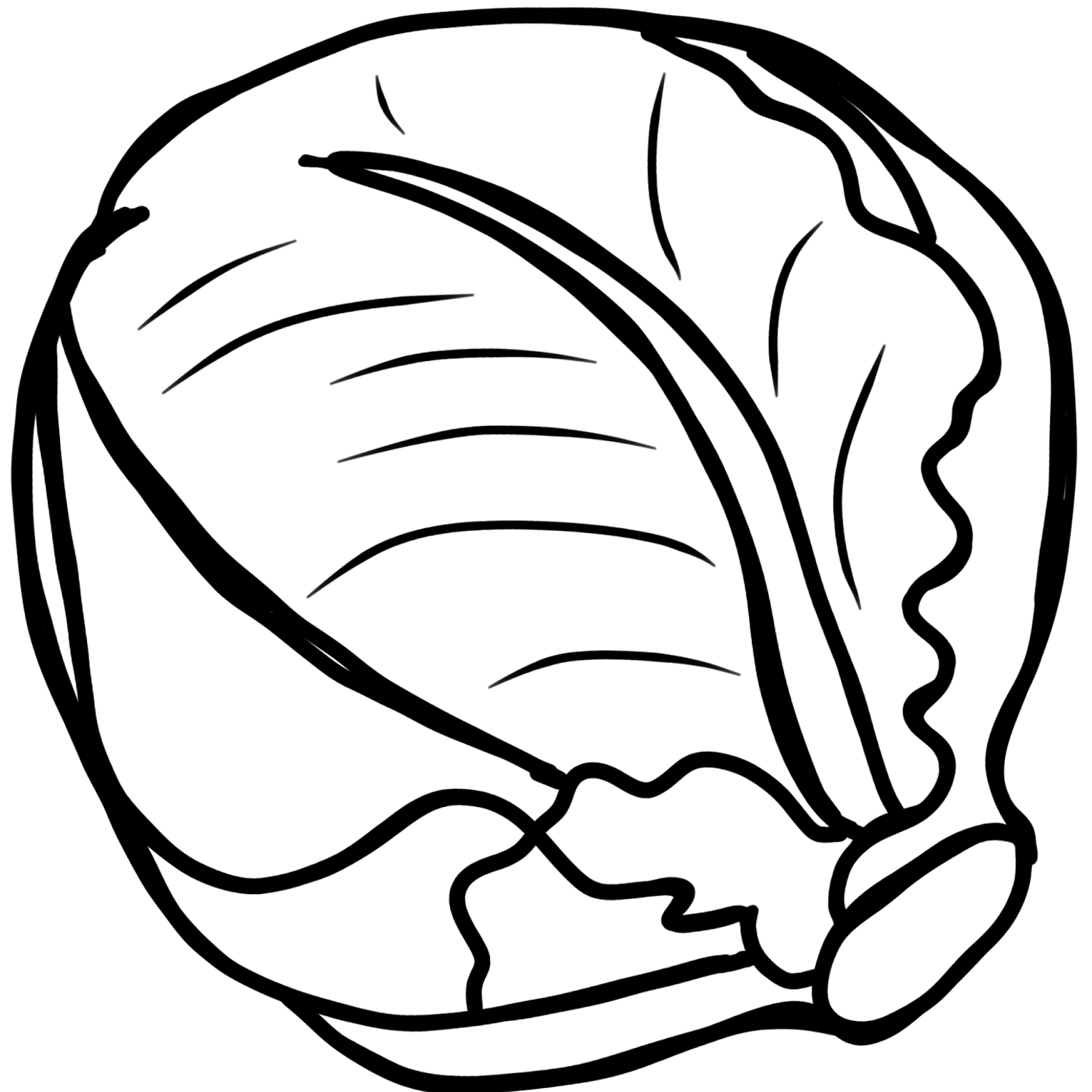 lettuce drawing png