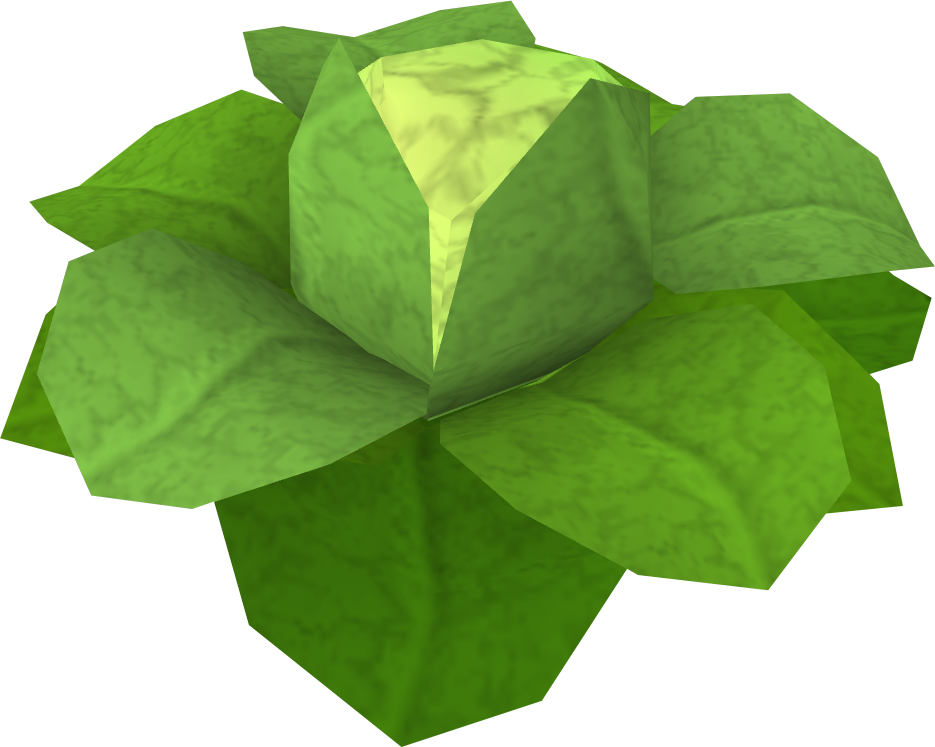 Cabbage merchant png