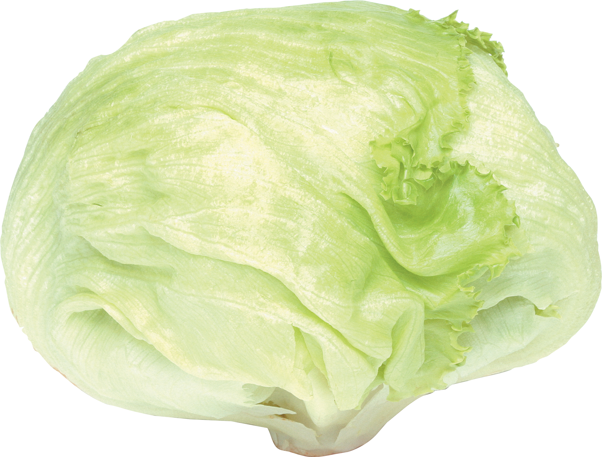 Vegetables plants. Cabbage plan view png graphic free download