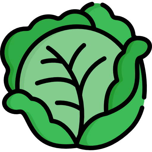 Free food icons icon. Cabbage plan view png graphic black and white library
