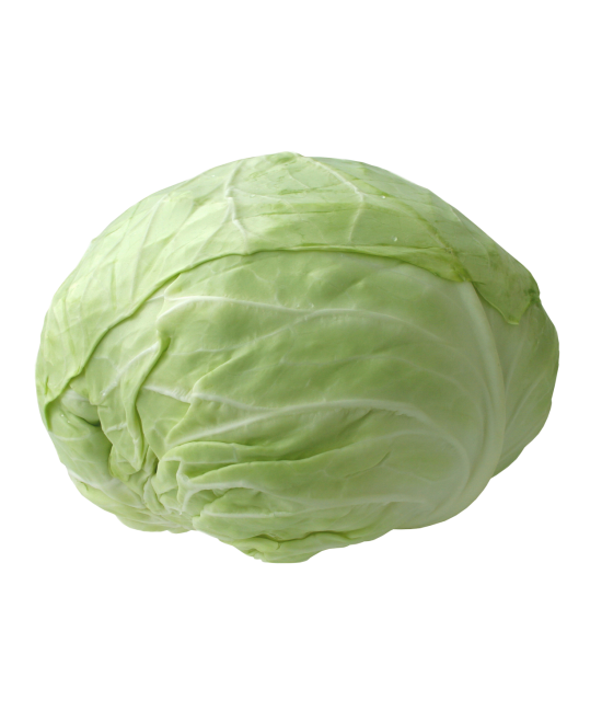 Cabbage plan view png. Patta gobhee sale kg