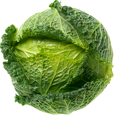 Cabbage plan view png. Safe leafy greens