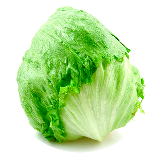 Cabbage plan view png. Benefits of iceberg lettuce