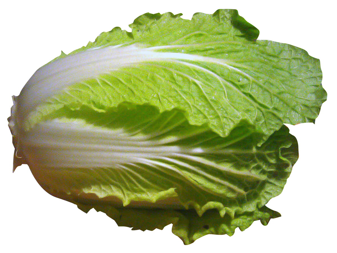 Napa cabbage png. Chinese images pngpix image
