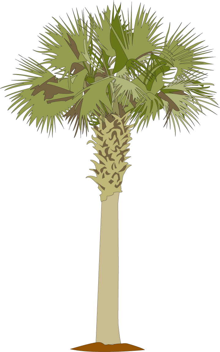 Cabbage tree in plan png. Palmetto pixels low country