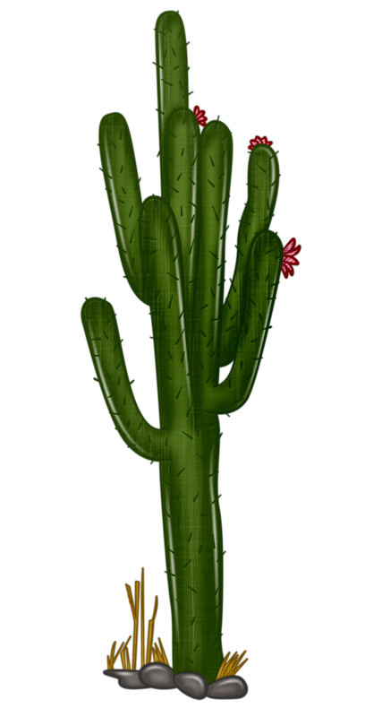 cactus png small