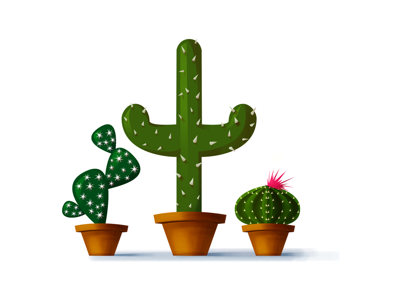 Cactus drawing png. How to create different