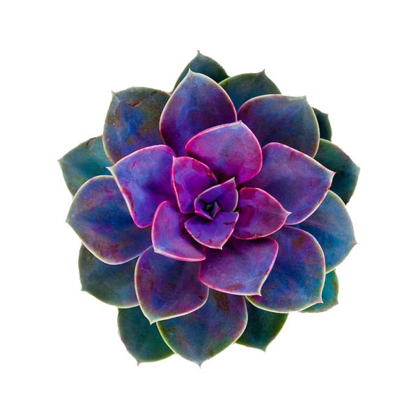 cactus flower png