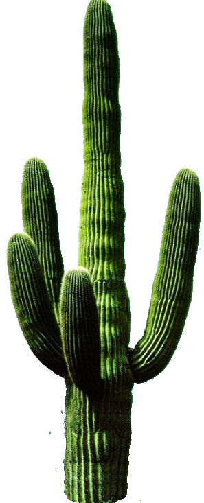 Cactus png potted. Inspiration for the pad