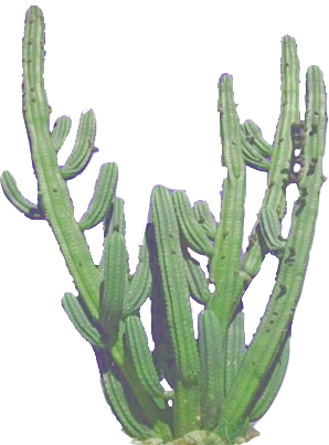 Drawing Cactus Aesthetic Transparent Png Clipart Free Download