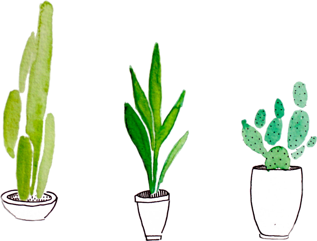 Stickers transparent plant. Collection of cactus