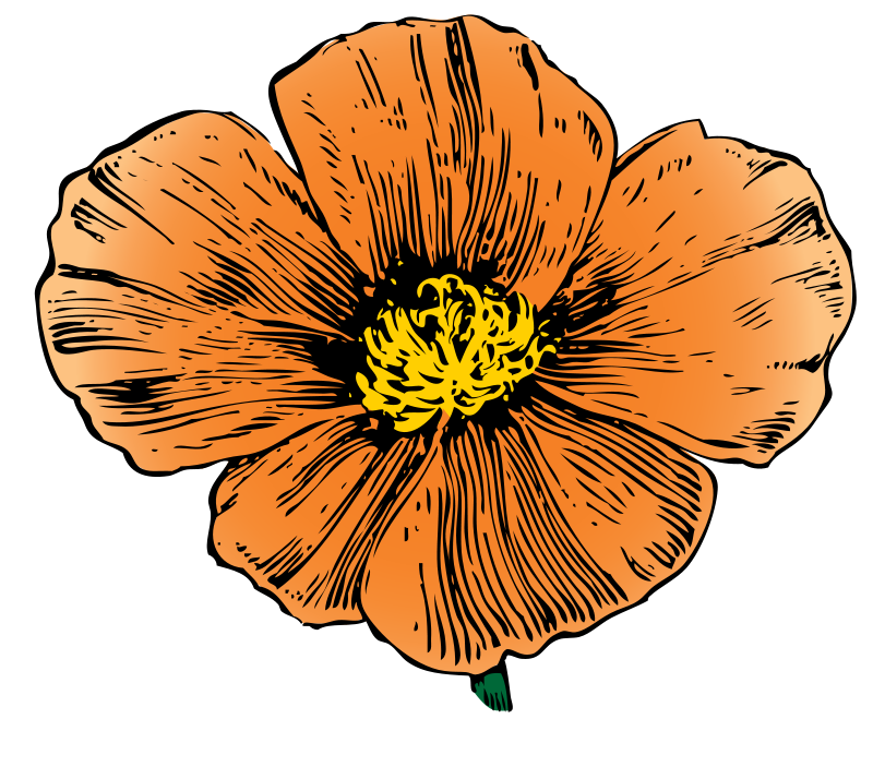 Mexican flowers vector png. Free ca cliparts download