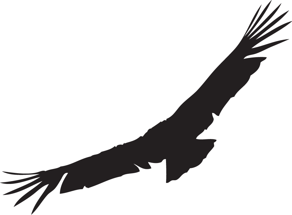 condor drawing silhouette