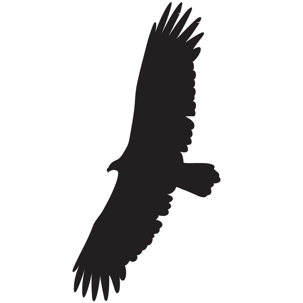 California condor png. Overview all about birds