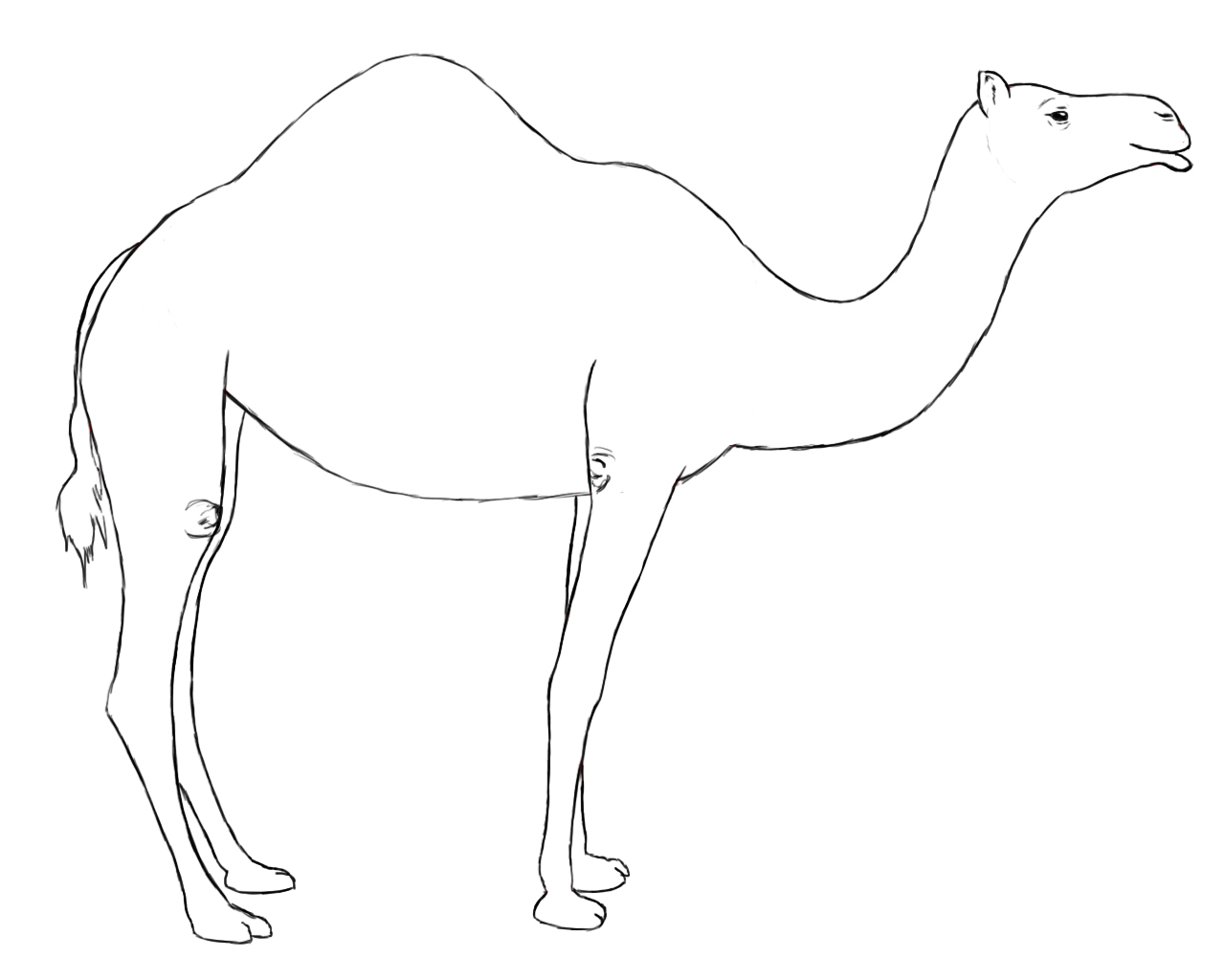 Camel clipart simple. Easy drawing at getdrawings