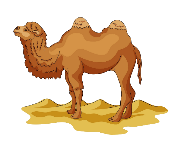 Camel transparent desert clipart. Wild bactrian drawing cartoon