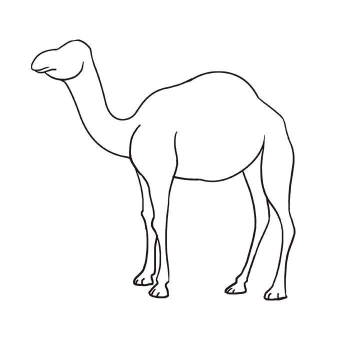 Drawing camels transparent. Drawn camel www imagenesmi