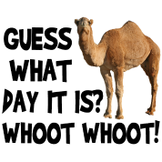 Camel transparent hump day. Guess what it is