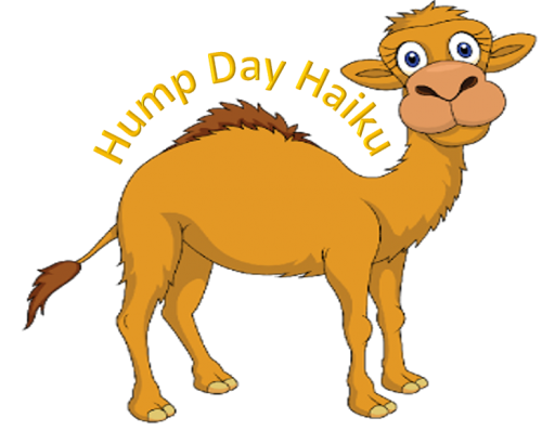 Camel transparent hump day. Haiku contentment and french