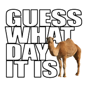 Camel transparent hump day. Png hd images pluspng
