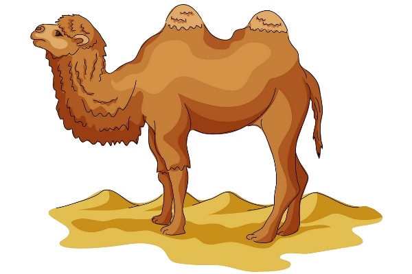 Camel transparent two. Png background hd free