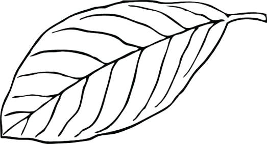 Can clipart clipart black. Leaf and white of