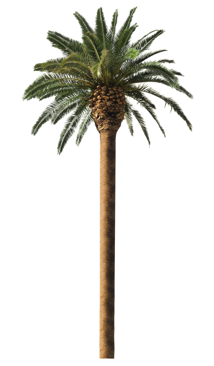 Canary palm png. Date free transparentpng