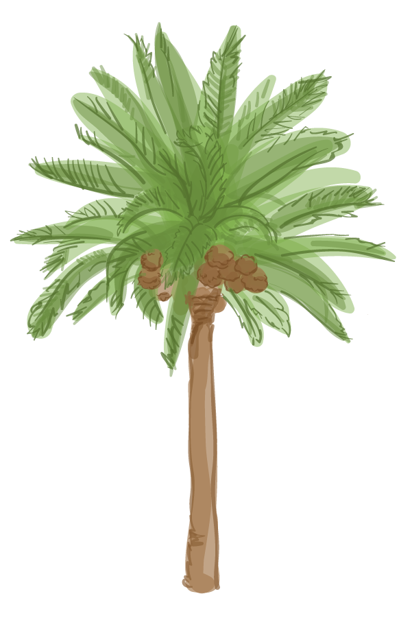 Canary palm png. L a s trees