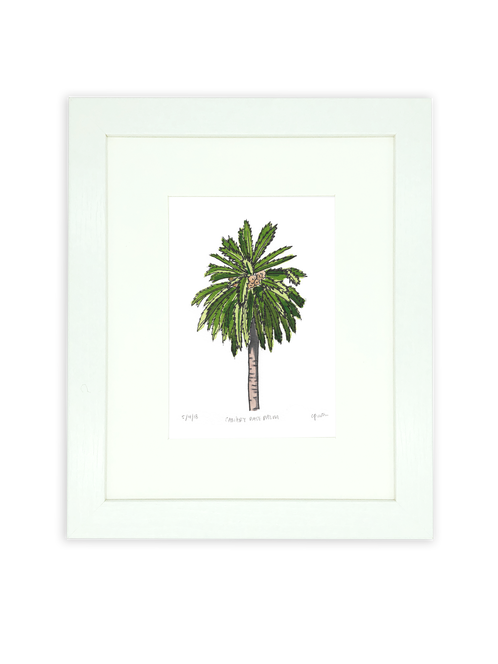 Canary palm png. Day date tree