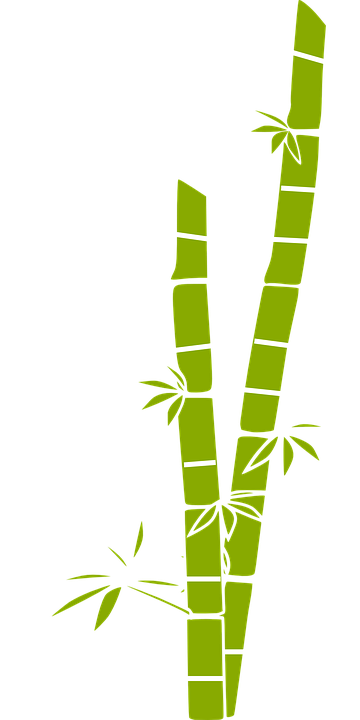 Cane drawing sugarcane plant. Collection of free baboo